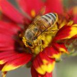 اجتماع زنبورعسل