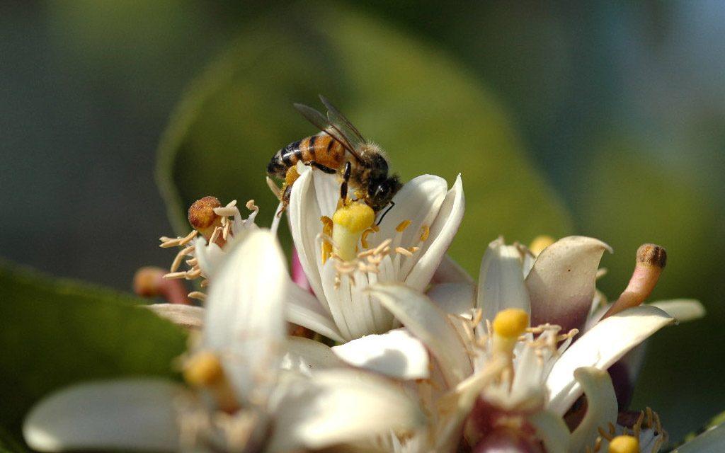 روش های گوناگون در زنبورداری