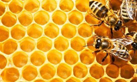 توليدات زنبورعسل