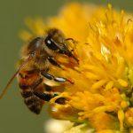 عوامل مؤثر در پرورش و نگهداری زنبور عسل