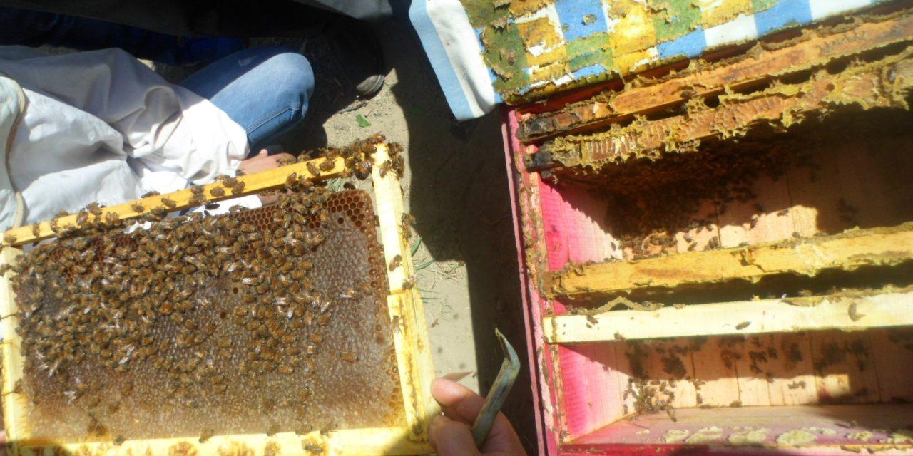 سرپوش سازی برای عسل
