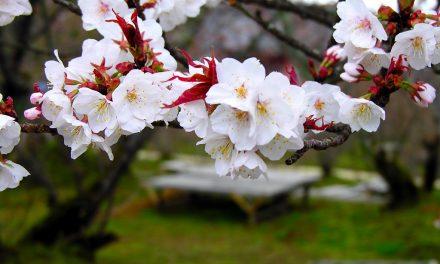 زنبورداری در بهار