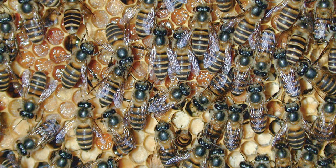 جلوگیری از ازدحام زنبورعسل