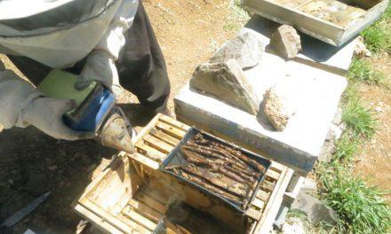 زنبورداری در پاییز و زمستان