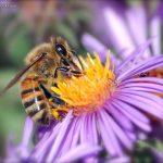 گروه های مختلف اجتماع زنبور عسل