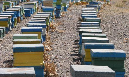 زنبورداری ارگانیک ، عسل ارگانیک