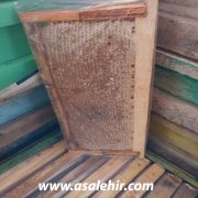 عسل طبیعی شان _عکس5